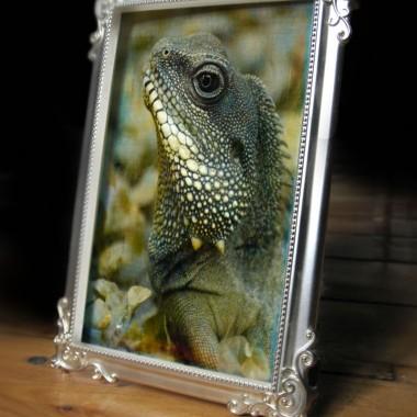 Reptile-framed-Timothy-Huggett-©1014