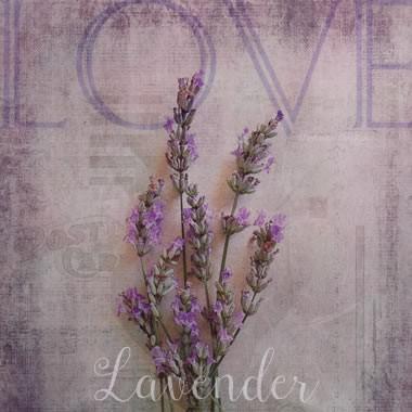 lavender graphic design clip